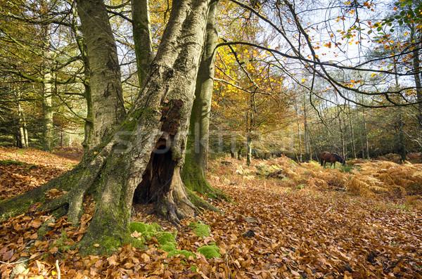 осень новых лес природы лошади листьев Сток-фото © flotsom