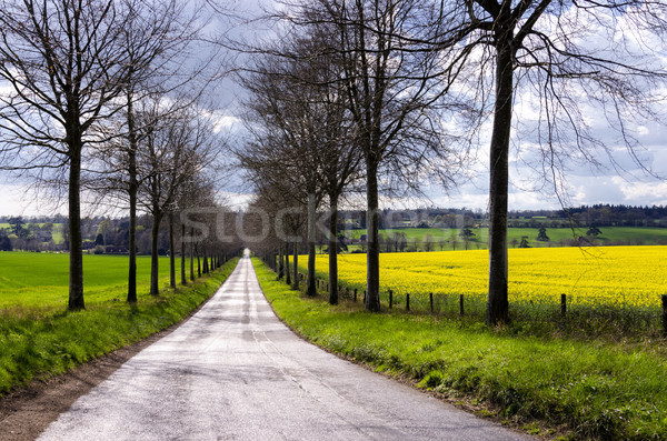 Avenue through Rapeseed Fields Stock photo © flotsom