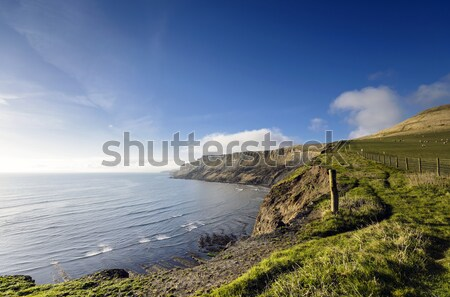 Gad Cliff on Dorset's Jurassic Coast Stock photo © flotsom