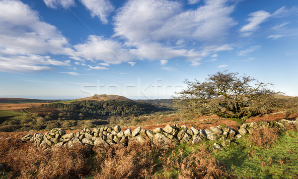 Autumn on Dartmoor Stock photo © flotsom