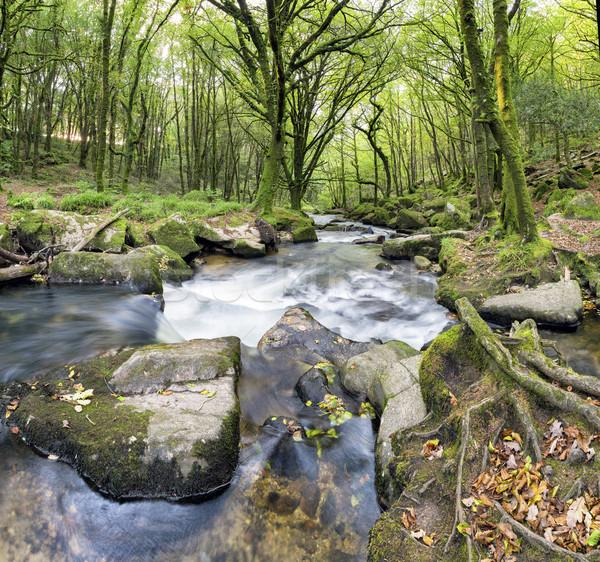 Foresta fiume meridionale acqua panorama Foto d'archivio © flotsom