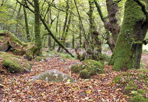 древних южный край пейзаж деревья лет Сток-фото © flotsom