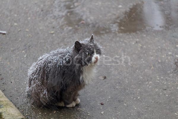 Hajléktalan macska utca ül hó díszállatok Stock fotó © fogen