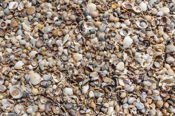 Many sea shells on a beach summer background. Stock photo © fogen