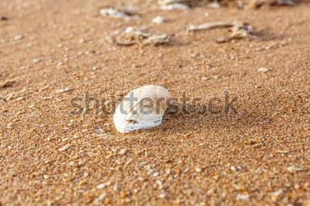 Oude shell zand schelpen zee Stockfoto © fogen