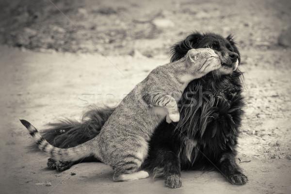 Kat zoenen hond kus Stockfoto © fogen