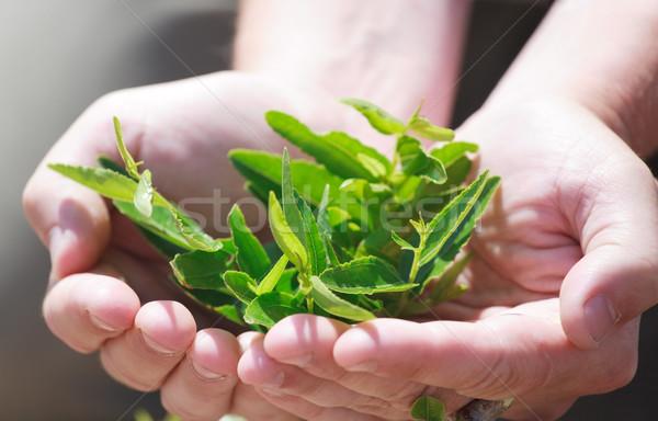 Jonge handen landbouwer vruchten vitaminen vitamine Stockfoto © fogen