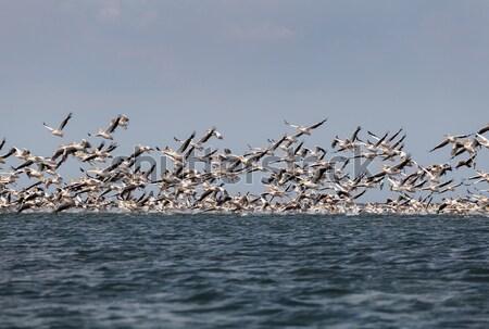 Vogels roze vliegen water vogel Stockfoto © fogen