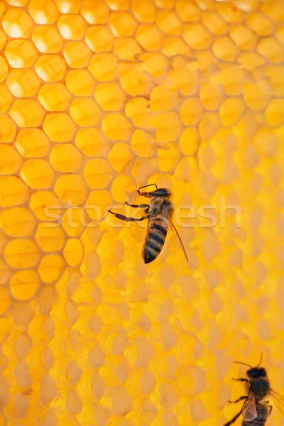Bee кадр меда рабочих пчел соты Сток-фото © fogen