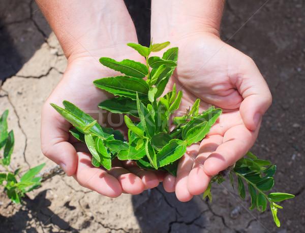 Fiatal kezek gazda gyümölcs vitaminok vitamin Stock fotó © fogen