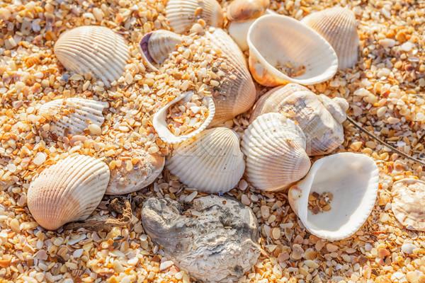 оболочки песчаный пляж снарядов морем побережье Сток-фото © fogen