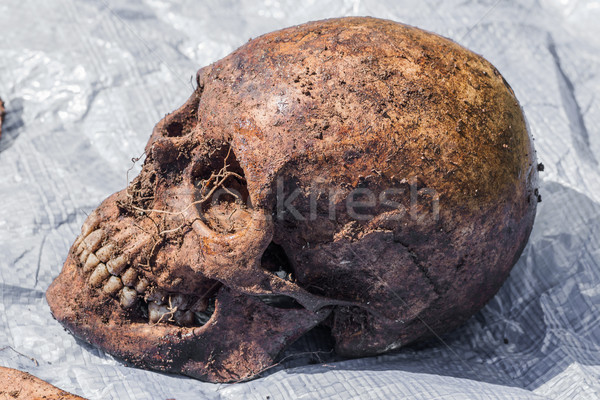 Skeleton remains of a buried unknown victim Stock photo © fogen