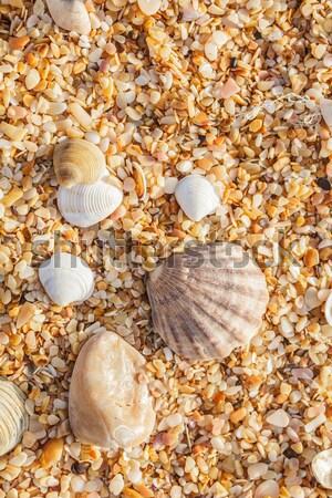 Kum kabukları deniz sahil Stok fotoğraf © fogen