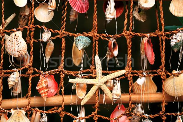 Panel kabukları deniz Stok fotoğraf © fogen