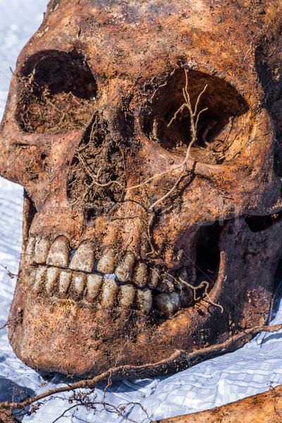 скелет похороненный неизвестный жертва человека кость Сток-фото © fogen