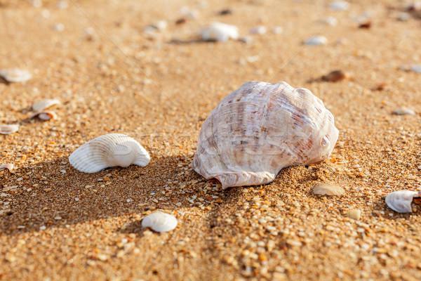 Zand schelpen zee kust Stockfoto © fogen