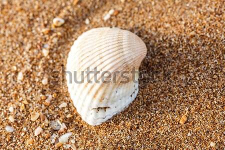 Zee shell zand schelpen kust Stockfoto © fogen