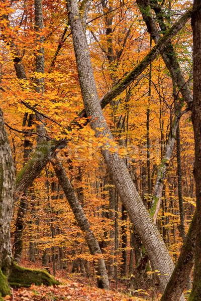 красивой осень лес путь природы Сток-фото © fogen