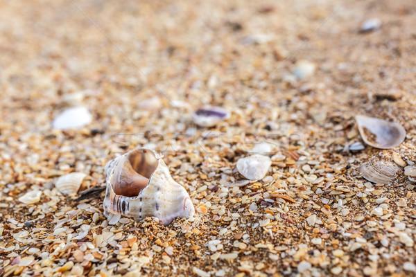Eski kabuk kum kabukları deniz Stok fotoğraf © fogen