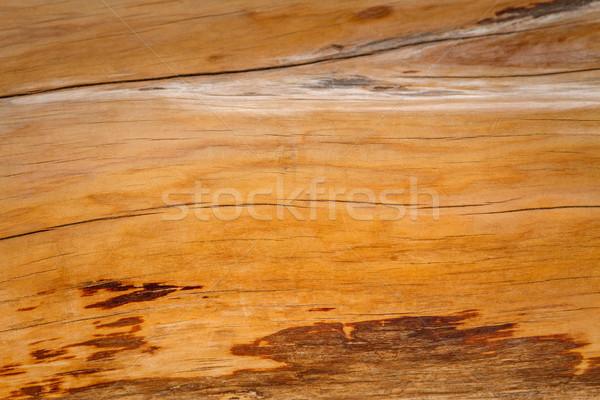 Schors textuur boom abstract natuur Stockfoto © fogen