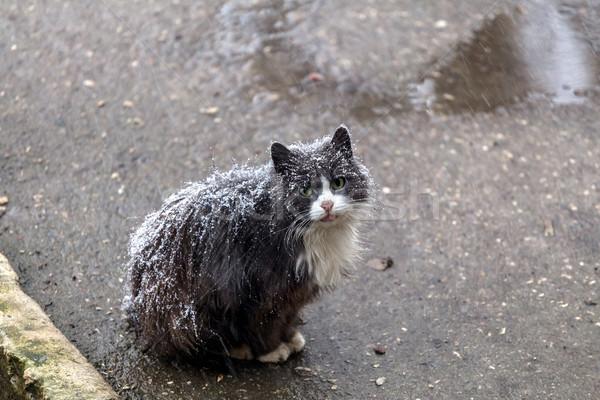 Evsiz kedi oturma sokak kar kış Stok fotoğraf © fogen