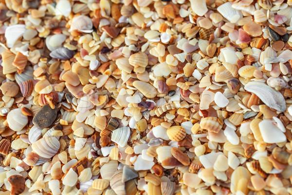 Deniz kum kabukları sahil Stok fotoğraf © fogen