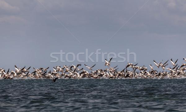 Vándorlás rózsaszín sereg elvesz el felület Stock fotó © fogen