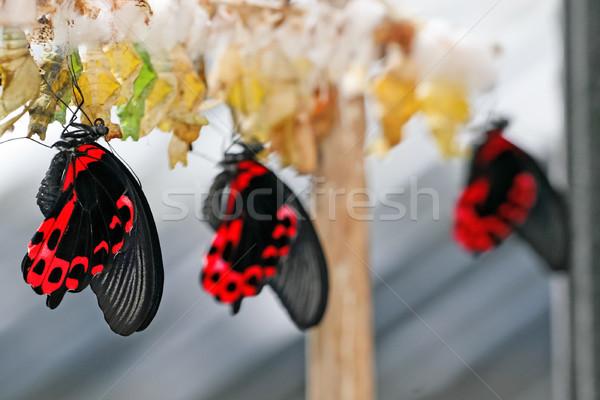 Сток-фото: бабочка · фермы · природы · зеленый