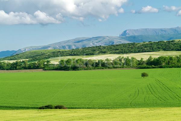 Veld groene tarwe panorama blauwe hemel wolken Stockfoto © fogen