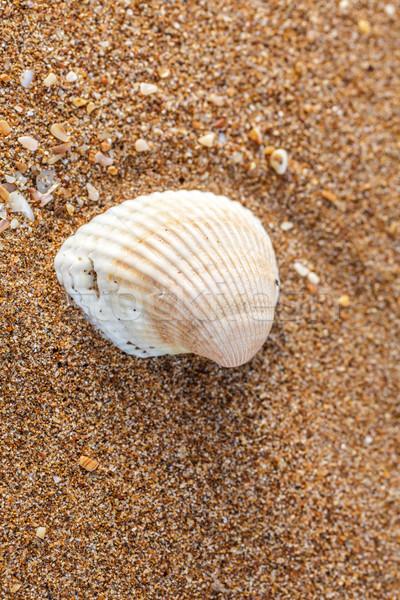 оболочки песок снарядов морем побережье Сток-фото © fogen