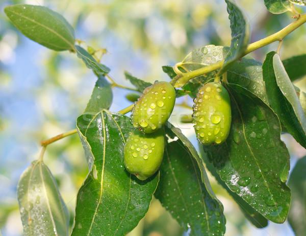 Vruchten vitaminen vitamine vitamine c business Stockfoto © fogen