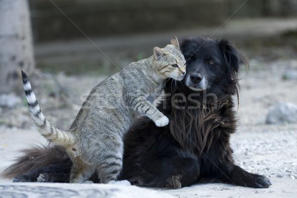 Kat hond zoenen kus vriendschap Stockfoto © fogen