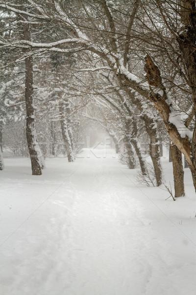 Geçit sabah kış yol dondurulmuş ağaçlar Stok fotoğraf © fogen