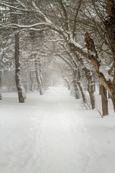 Steegje ochtend winter pad bevroren bomen Stockfoto © fogen