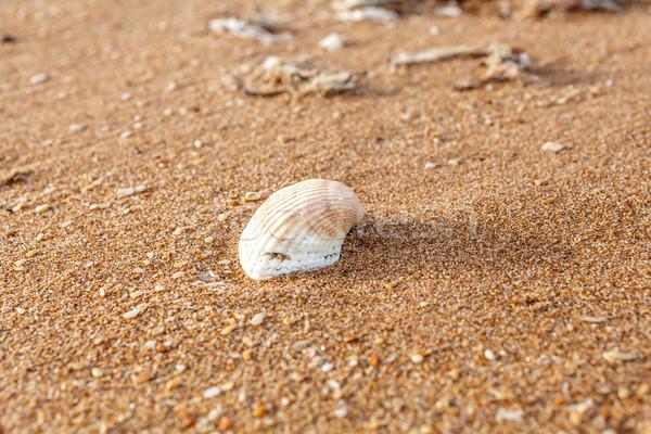 песок снарядов морем побережье Сток-фото © fogen