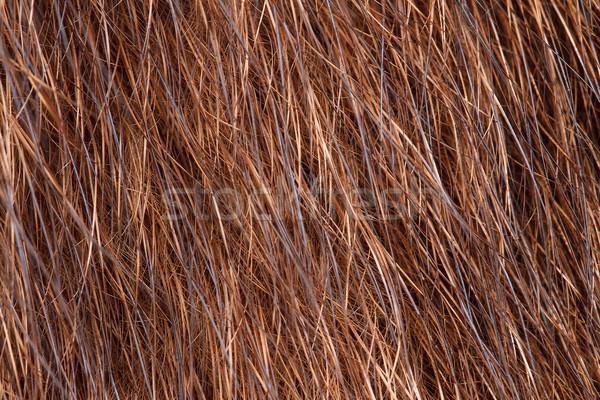 Doğal kürk sıcak kat yatay Stok fotoğraf © fogen