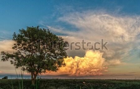 одиноко дерево облака небе пейзаж лист Сток-фото © fogen