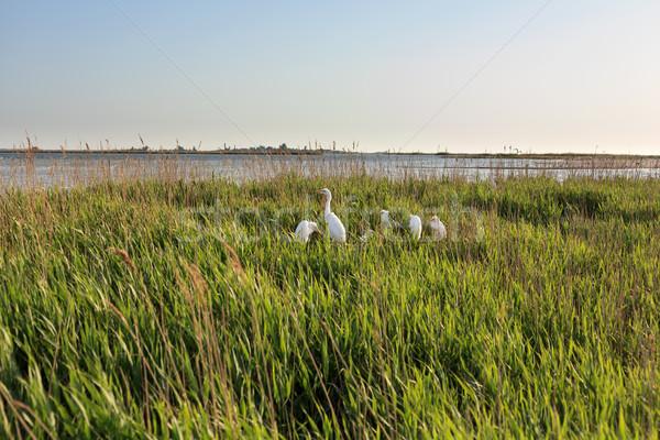 Familie witte water natuur landschap zee Stockfoto © fogen