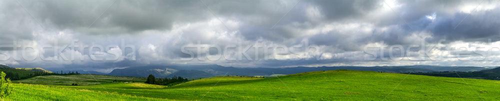 Stockfoto: Berg · plateau · achtergrond · zomer · koe