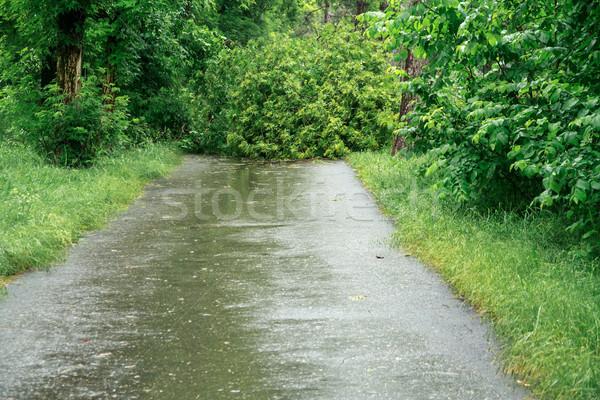 Gevolgen orkaan boom gebroken sterke wind Stockfoto © fogen