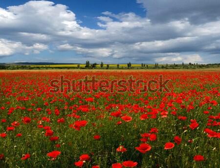 Poppy veld hemel wild bewolkt gras Stockfoto © fogen