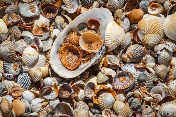 Many sea shells on a beach summer background. Stock photo © fogen