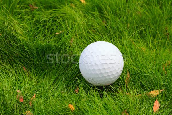 мяч для гольфа зеленая трава природы лет зеленый Сток-фото © fogen
