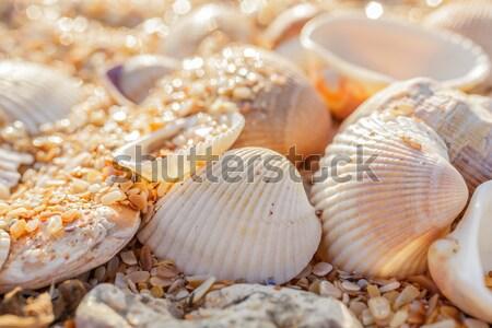 Shell zand schelpen zee kust Stockfoto © fogen