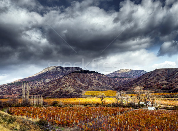Vineyards. The Autumn Valley. HDR Stock photo © fogen
