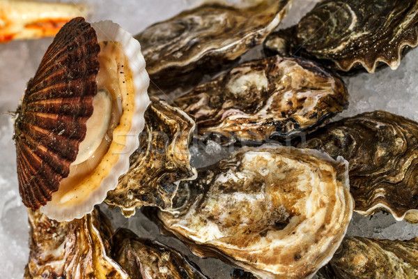 Oysters on the ice Stock photo © fogen