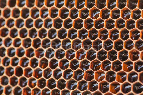 Ingresso sciame a nido d'ape primo piano medici frame Foto d'archivio © fogen