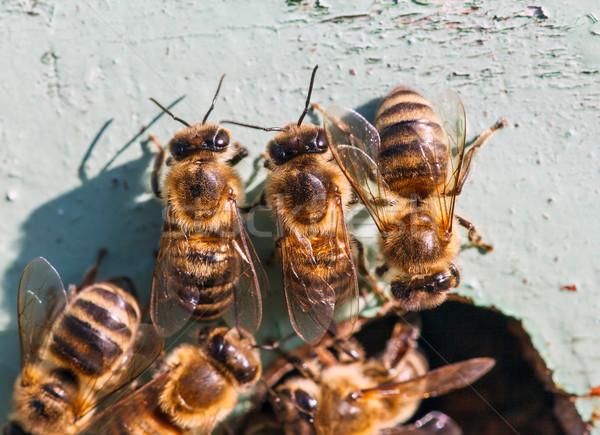 Bal arılar giriş kovan işçi Stok fotoğraf © fogen