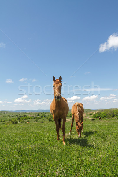 pasture on a mountain plateau Stock photo © fogen