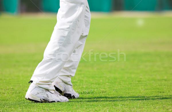 Cricket #3 Stock photo © Forgiss